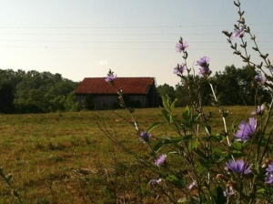 Barn in Speedwell, TN